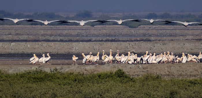 Khijadiya Bird Sanctuarya