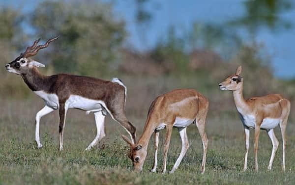 Narayan Sarovar Wildlife Sanctuary