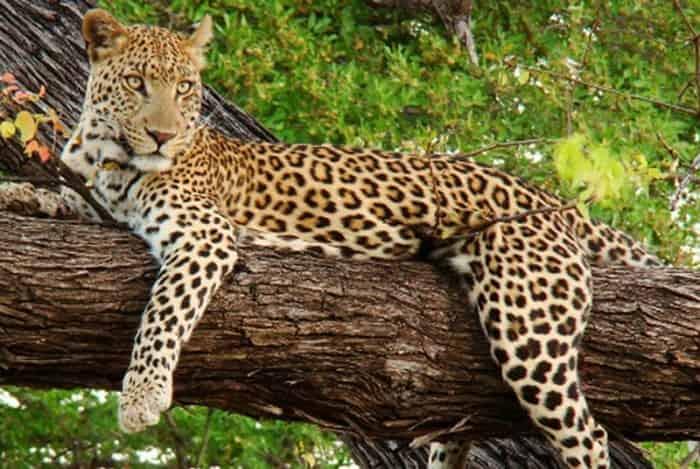shoolpaneshwar wildlife sanctuary palchhi gujarat
