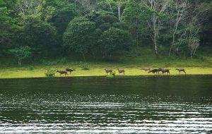 thekkady-wildlife