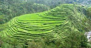 hills of kumaon trip