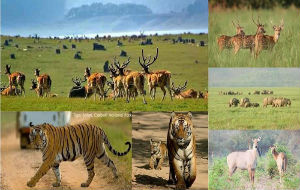 corbett-national-park