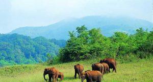 The Mudumalai National Park and Wildlife Sanctuary
