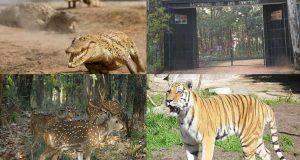 Hazaribagh Wildlife Sanctuary